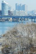 '눈이 아닙니다' 밤섬 버드나무 백화현상