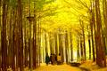 노란 서울숲 단풍길