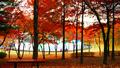 오색빛으로 물든 서울의 예쁜 단풍길