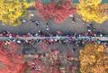 가을 단풍 아래서 만드는 무지개 가래떡