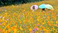 가을비...'우산속 꽃놀이'
