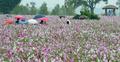 가을비 내리는 코스모스꽃밭