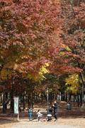'가을 속으로'