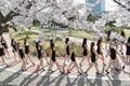 모델지망생들의 벚꽃워킹