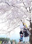 동화같은 벚꽃 축제