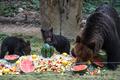 곰 가족의 '과일 파티'
