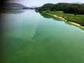 녹색의 낙동강