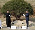 평화의 소나무, 한라산-백두산 흙의 만남