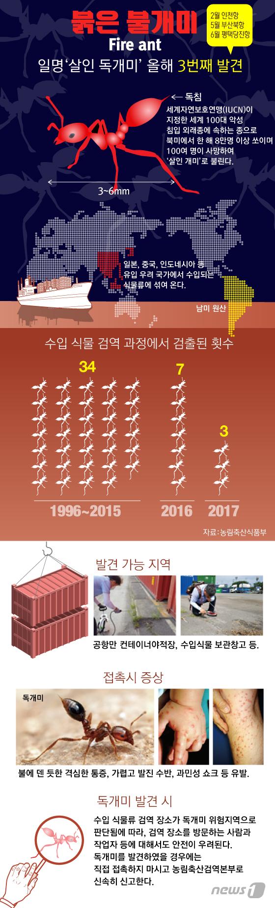 [그래픽뉴스] 붉은 불개미 발견시 주의사항