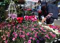 봄향기 가득한 꽃시장