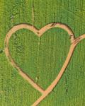 '사랑이 싹트는 꽃밭'