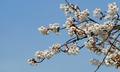 파란하늘 아래 피기 시작한 봄꽃