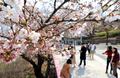 2019 여의도 봄꽃축제