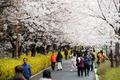 '봄이 왔어요'