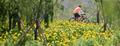 창포꽃 만발