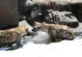 거품 목욕하는 하이에나들