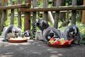 특식 먹는 알락꼬리여우원숭이들