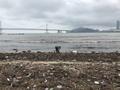 쓰레기로 뒤덮은 광안리 바다