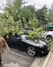 태풍 링링 북상...차량위에 부러진 나무