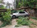 태풍 인천 강타...강풍에 나무 쓰러져