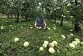 태풍으로 망연자실한 농장주