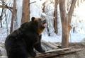 에버랜드 불곰 '추운 겨울이 좋아'