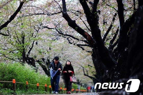 \'아쉬운 벚꽃, 떠나는 봄\'