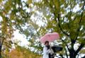 단풍잎 떠나보내는 가을비
