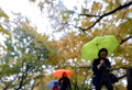 단풍 싣고 떠나는 가을비