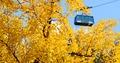 케이블카 타고 단풍구경