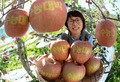 사과 맛있게 드시고 '수능대박' 나세요!