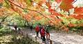 상림공원에서 가을을 느껴보세요