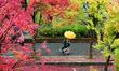 [24일 날씨] 전국 대체로 흐려…제주 산간 최고 80mm 비