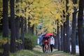 가을비 '산책'