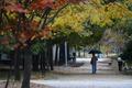 가을비 내리는 오후