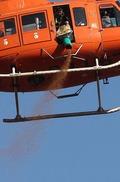 항공 살포되는 산양삼 종자