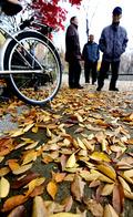 '가을의 끝자락'
