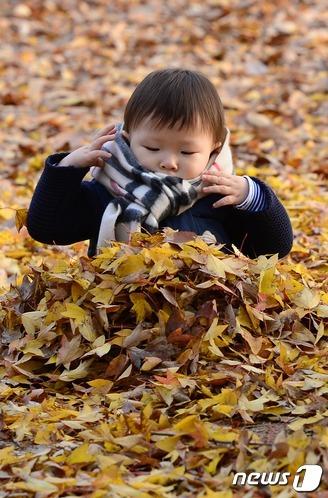 낙엽 이불