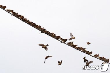 참새들의 질서의식