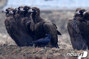 배고픈 독수리 오형제