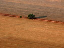 끝이 안보이는 브라질 콩 생산지
