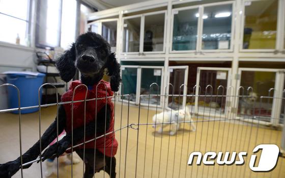 휴가철 애물단지 신세…'헌신짝' 된 반려동물