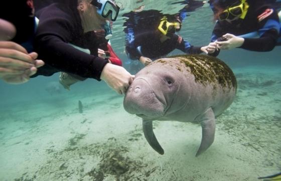 미, 바다소 보호위해 접촉 제한