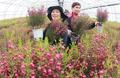 봄의 전령 브로니아꽃 활짝