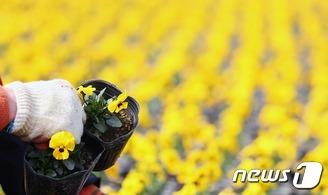 3월, 봄의 시작