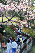 벚꽃길 따라