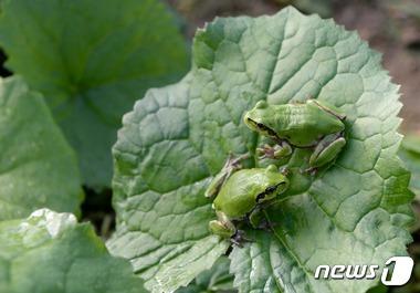 봄 마중 나온 개구리