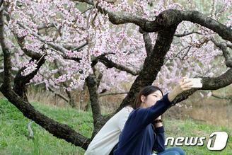 복사꽃 아래서 즐기는 봄의 정취