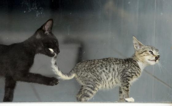 학대당하다 구조된 길고양이들