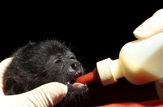 목숨을 부지한 아기 원숭이